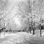 Through his camera lens, Bates student Fred Reuel Jones, captures the beauty of Frye St. on a winter day, circa 1907.
