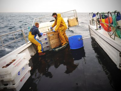 crabfishing6