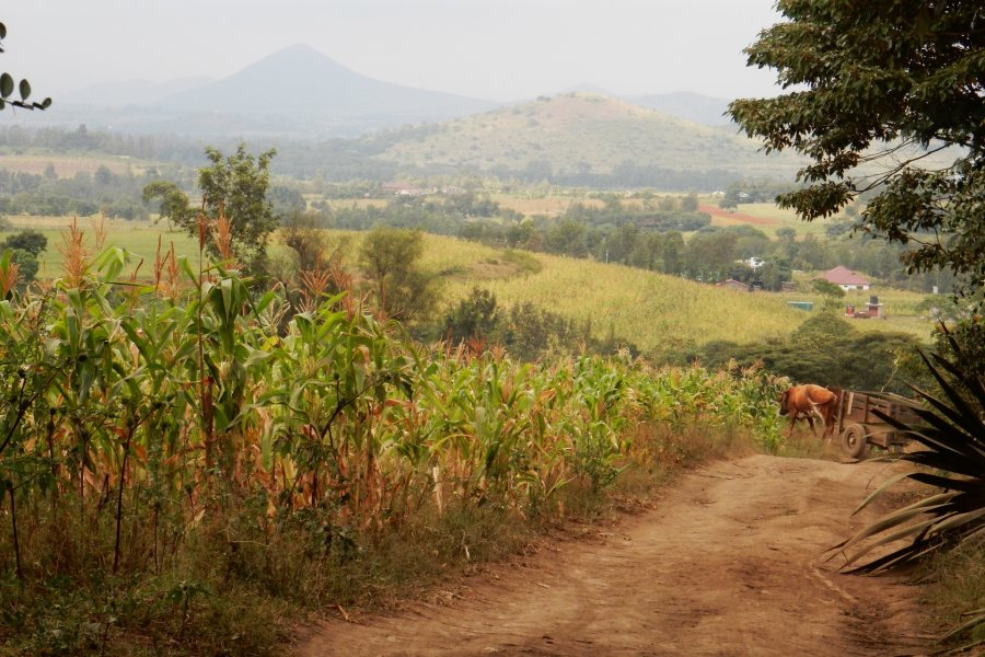 A view from the twice-daily two-mile walk Bruce Fryer '79 took to and from the Maasai Joy Children's Centre in summer 2015. Photo courtesy of Bruce Fryer '79.