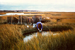 Woods Hole MBL Semester in Environmental Science Information Sessions