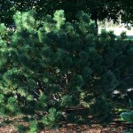 Get to Know Your Bates Trees