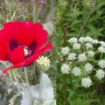 Plants of the Week Sept 29-Oct 5
