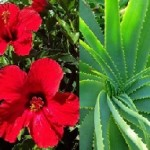Plants of the Week Oct 20-26