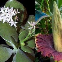 Plants of the Week Nov 3-9