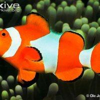 Clams, Fish and Ocean Acidification