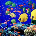 Global warming, turtles, and coral reef fish