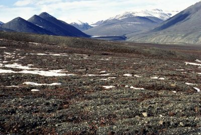 Climate change may affect the ability of tundra to serve as a carbon sink. Photo from www.bio.miami.edu