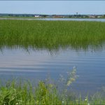 Sea Level Rise and Wetlands