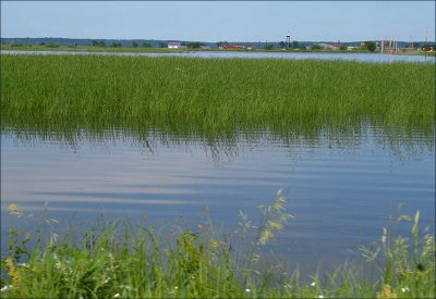 Rising sea level could threaten wetlands, especially in areas where human development has created artificial boundaries around the margins of the wetland.