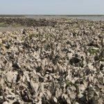 Tuna and Oyster Overfishing