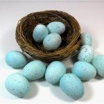 Don Dearborn provides expert commentary on 3d printing of birds eggs for research