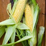 Plant Blogs – Bio 117 – Corn