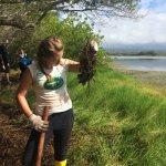 The Battle Against Kikuyo Grass Continues (Puerto Villamil)