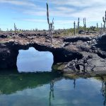 Snorkeling in Tuneles and swimming under lava tunnels
