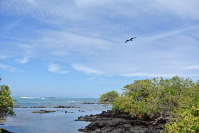 One of the views from the trail on the way to the Wall of Tears. A frigate bird soars above.