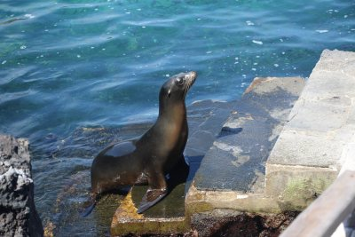 Sea lion that greeted us at Bartolome
