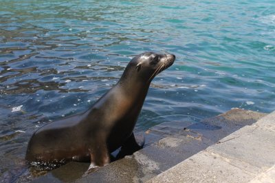 Sea lion greeting us on a dock