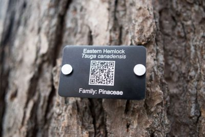Tree Tag for Eastern Hemlock