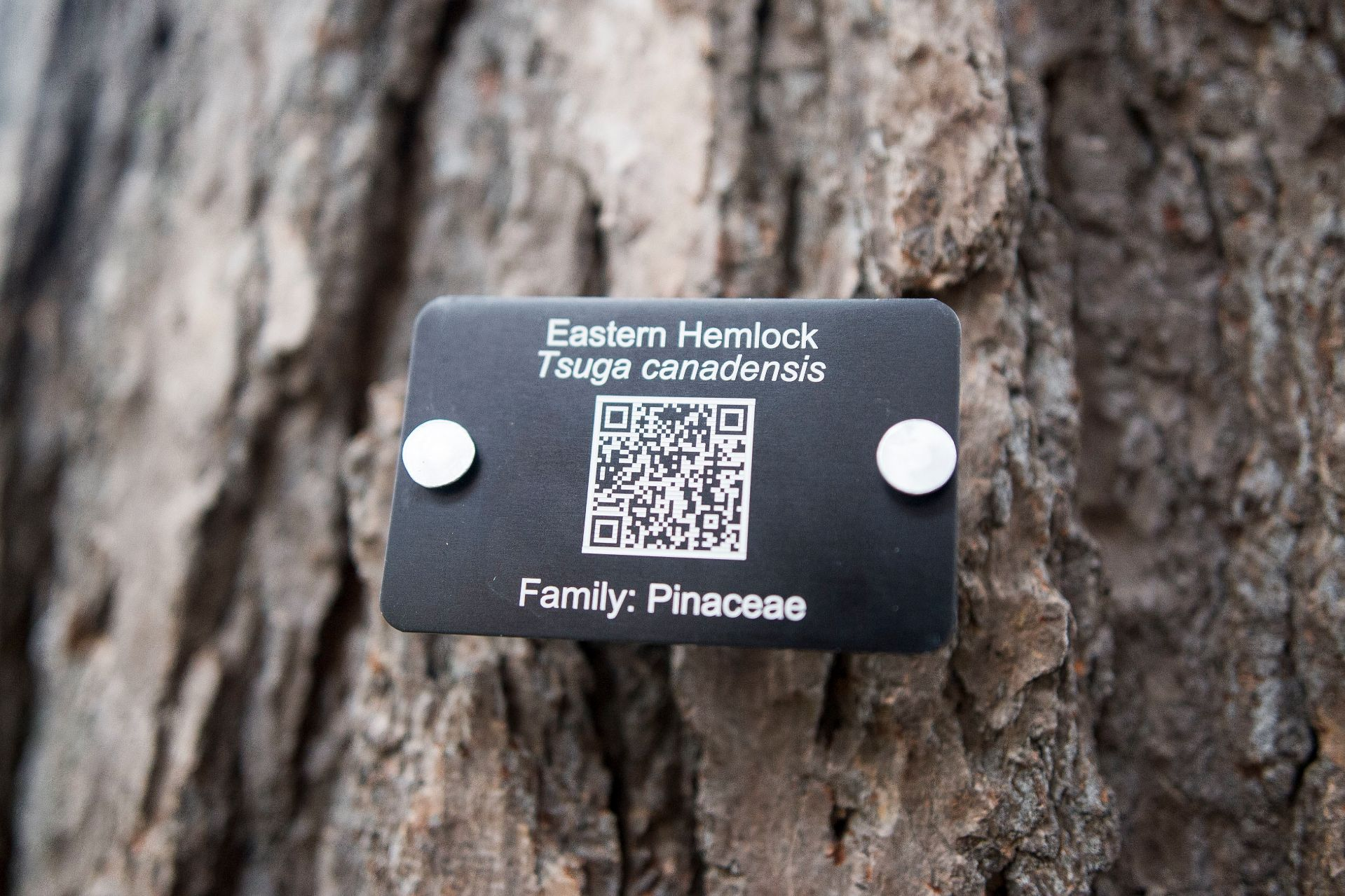 Tree Tags Bates Canopy Bates College