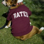 Baxter, an English Bulldog, looks for family member Justin Simon '08 of Canaan, N.H.