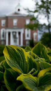 Closeup of greenery with Hathorn hall in background