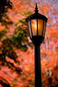 Fall foliage brings the Bates campus to life.