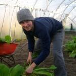Josh Stoll harvesting  greens in Canterbury,  New Zealand