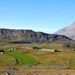 Sheep farming in Greenland