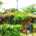 A cobb house with a living roof, typical of the sustainable natural building styles in the Ecovillage. Photo credit: http://www.theyearofmud.com