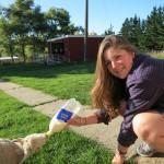 Amy Wyeth at her farm internship in New Zealand