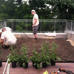 DC Greenworks installs a green roof