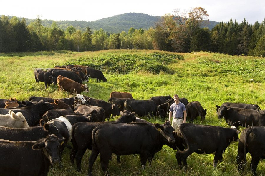 Gabe Clark '02 poses with his beef cattle on Cold Spring Ranch in New Portland, Maine, in 2008. (Phyllis Graber Jensen/Bates College)