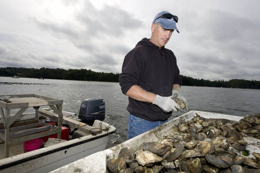 Eric Peters '87 owns the Norumbega Oyster Co., which cultivates oysters in the Damariscotta River. (Phyllis Graber Jensen/Bates College)