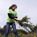 Laura David '05 pulls weeds and other invasive plants.