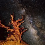 Tony Rowell, (United States) Bristlecone Pine and Milky Way, White Mountains, California, Fuji Crystal Archive paper mounted on archival grey matt with black Larson Juhl, 22 x 28 inches  Wollman 77