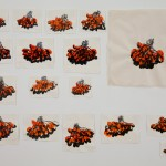 Dawn Clements, 17 drawings of milliner berries, in memory of my father, 2009, Sumi ink, and shellac-based ink on paper