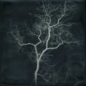 Shoshannah White, Night Tree, 2015