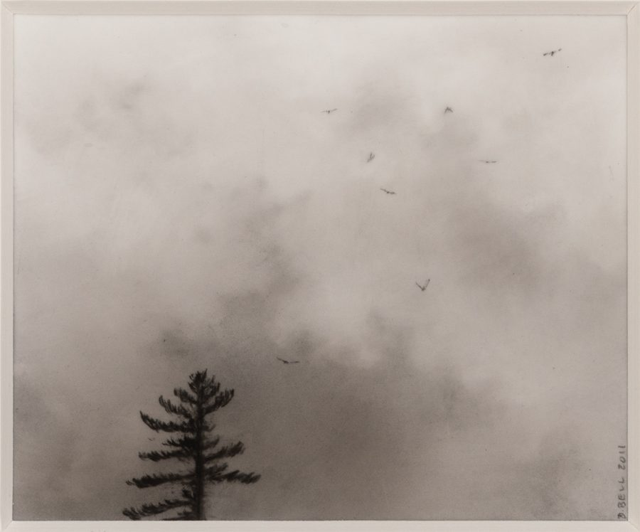Dozier Bell, Flock-Pine, 2011, charcoal on mylar, 2020.1.6