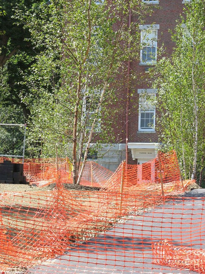 Birches and fences on Alumni Walk. (Doug Hubley/Bates College)
