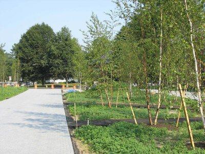 New Birches