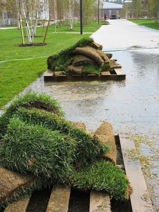 New sod. (Doug Hubley/Bates College)