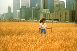 denes_wheatfieldweb