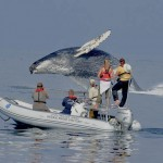 Friedlaender '96 returns to present humpback whale research