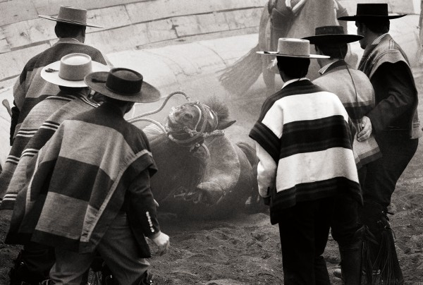 """Patagonia Rodeo,"" Chile, for the nonprofit Patagonia Sur. Photograph by Alexander Verhave '05"