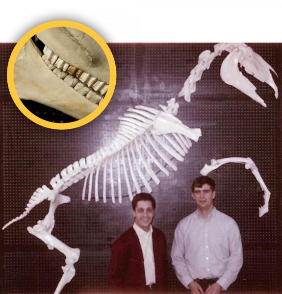 horse-skeleton-1969