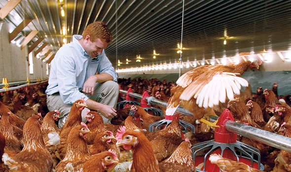 Jesse Laflamme '00, manager of Pete & Gerry's Organics, oversees an operation that's the antithesis of factory farming. Hens live cage-free in open barns, lay their eggs where they wish, and have outdoor access. Photograph by Phyllis Graber Jensen.