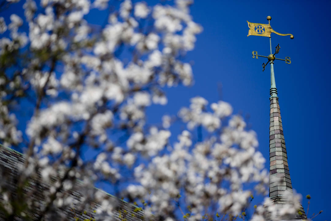 Spring blossoms frame a Chase Hall weather vane. (Phyllis Graber Jensen/Bates College)