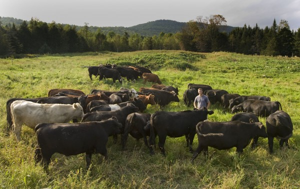 Bates Dining purchases grass-fed beef from Cold Spring Ranch in New Portland, Maine, a practice that helps to bolster the college's green dining rating. (Phyllis Graber Jensen/Bates College)