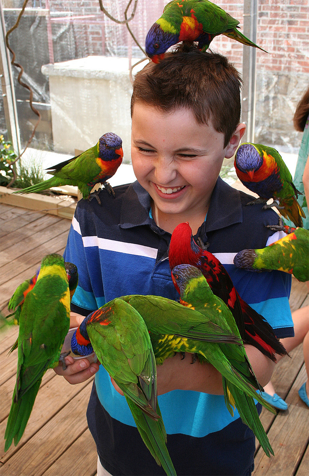 Stopping by the kid-friendly lorikeet aviary was part of intern Emilie Geissinger's duties at the Maritime Aquarium. Photograph courtesy of the Maritime Aquarium.