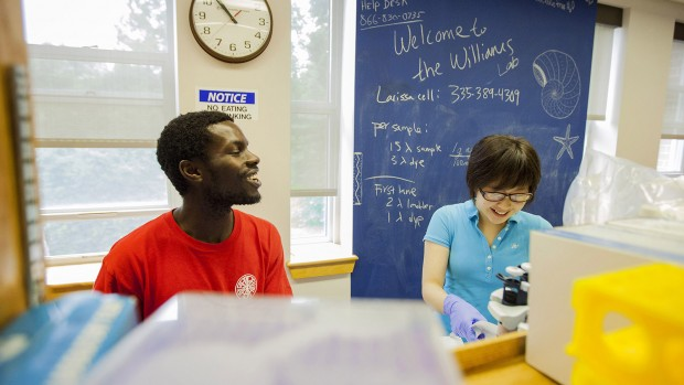 Biochemistry majors James Meyo '14 of Nairobi, Kenya, and Jenny Chen '16 of Englewood, Colo., at work in the lab of Larissa Williams, assistant professor of biology. Photograph by Marc Glass '88/Bates College.
